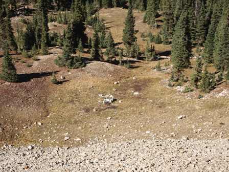 Colorado Jeep Crash