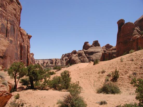 Bull Canyon Trail Moab UT