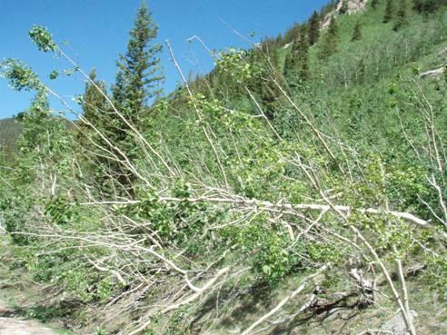 Colorado Avalanche Closes UTV Trail
